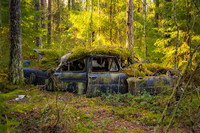 Some moss coated Ford Consul ❤️