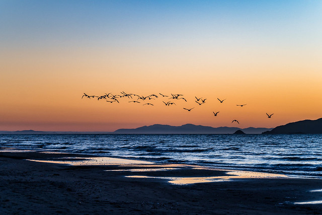 Flock Over the South Island