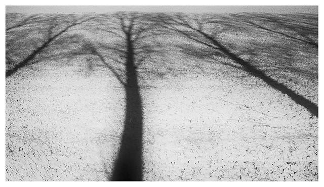 Shadow field