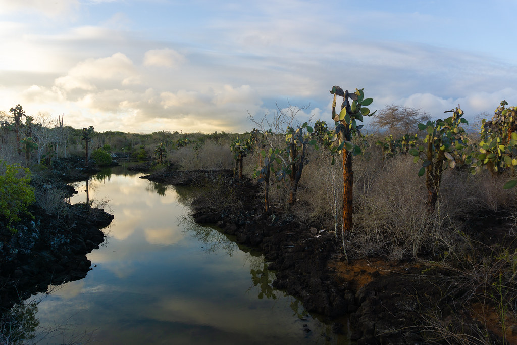 Nature in the Galapagos Islands