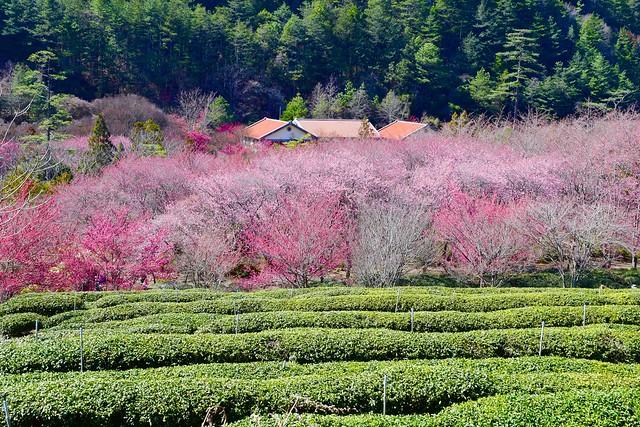 Wuling Farm, Taichung City, Taiwan, 武陵農場, 0220, 2021