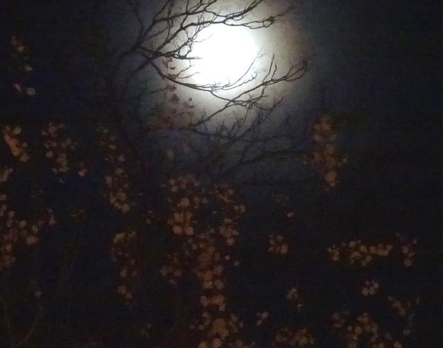 Moon of the Night