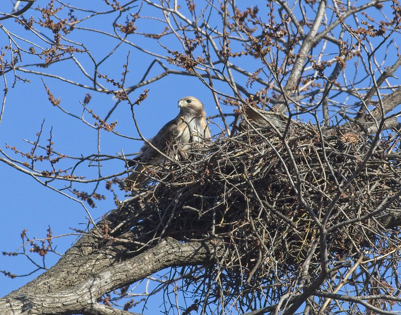 Christo on the nest