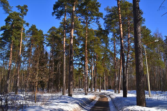 Melnitsa forest in Orekhovo-Zuyevo