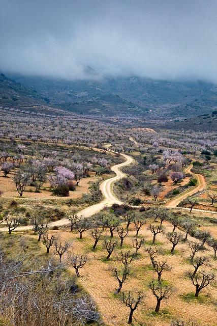 Valle de los almendros
