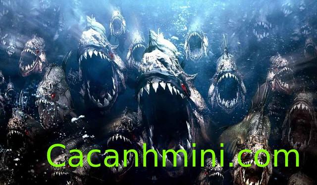 Những sự thật đáng sợ về loài cá Piranha