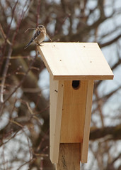 Eastern Bluebird Closed the Deal on New House
