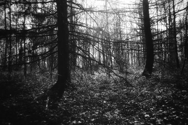 Bois des 7 Meuses