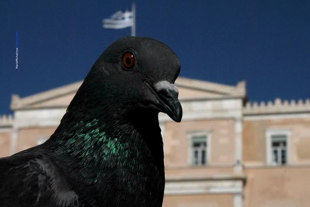Free as a bird...#greece1821-2021