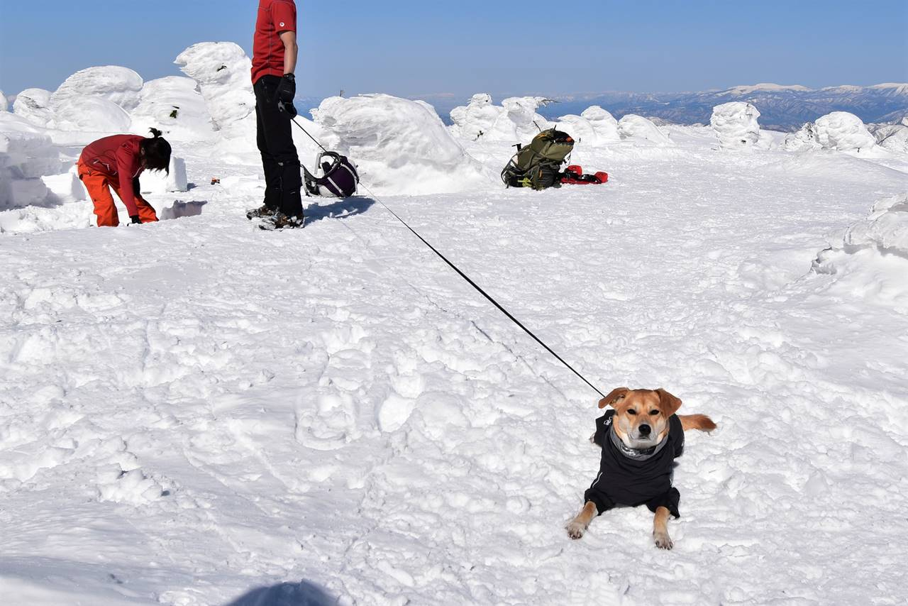 西吾妻山山頂にいたワンコ