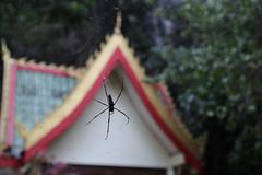 Laos 2016 #4311