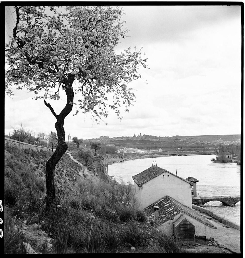 Almendro en flor en Toledo en 1941. Zona de río Chico junto al Tajo. Fotografía de Thérèse Bonney © The Bancroft Library, University of California, Berkeley
