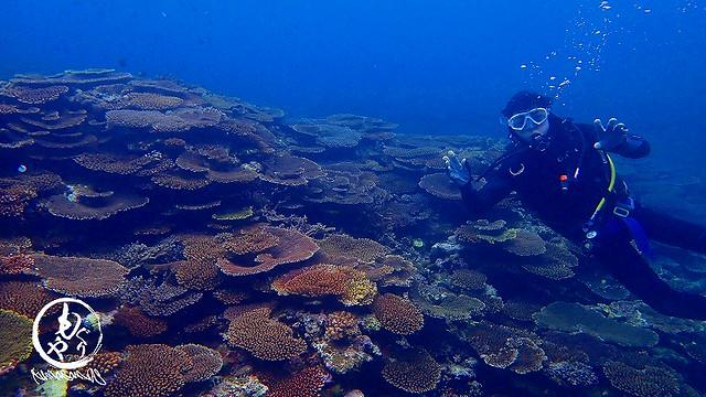 珊瑚もりもりでした☆