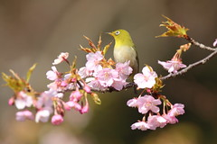 Spring colors in nature