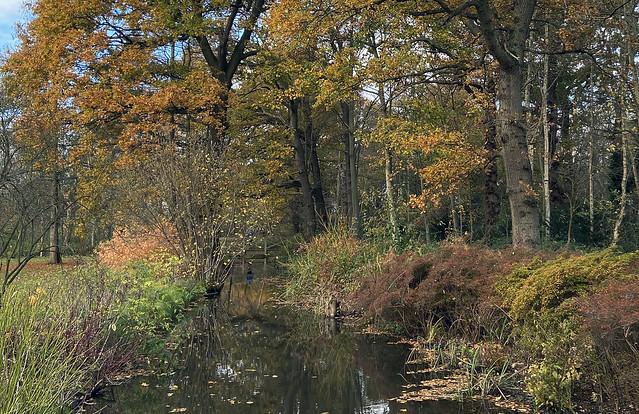 bushy park woodland gardens