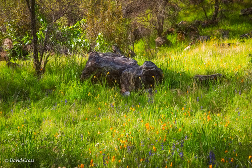 springlandscape california spring californiapoppy pleasantvalleyroad wildflowers sierranevadafoothills canonef24105mmf4lisusm lightroom6 poppies topazstudio canon5dmarkiii landscape nevadacounty lupine