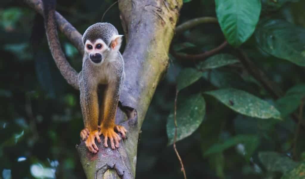 Les sons révèlent l'impact des feux d'Amazonie
