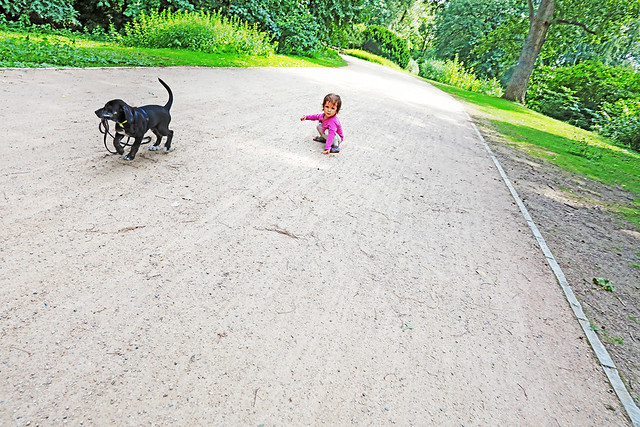 The Girl, the Dog, and the Leash She Let Go Of.