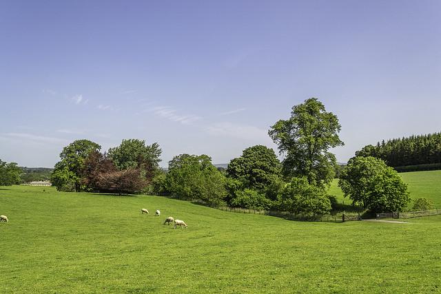 Gisburn Country Park , Lancashire -June 2020 !