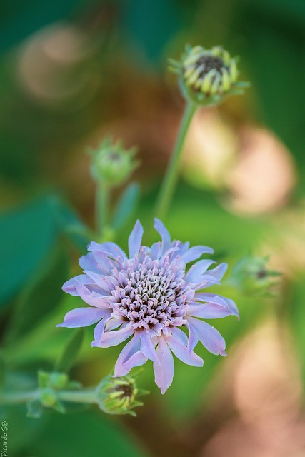 Una flor del sendero...