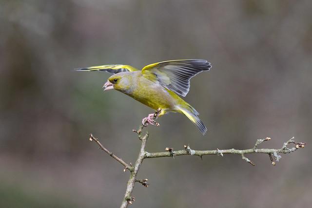 NEWS: Volunteers help to shape conservation priorities for UK birds