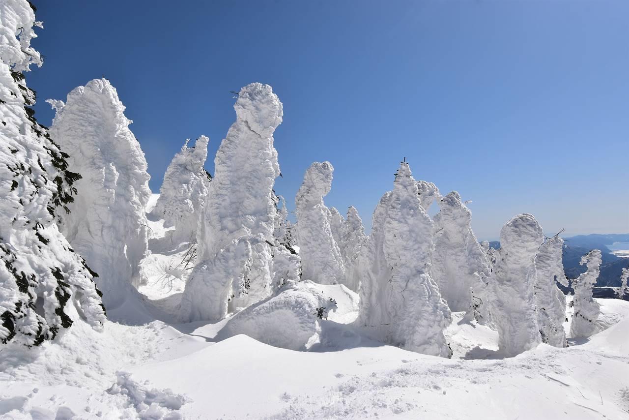 冬の西吾妻山の樹氷