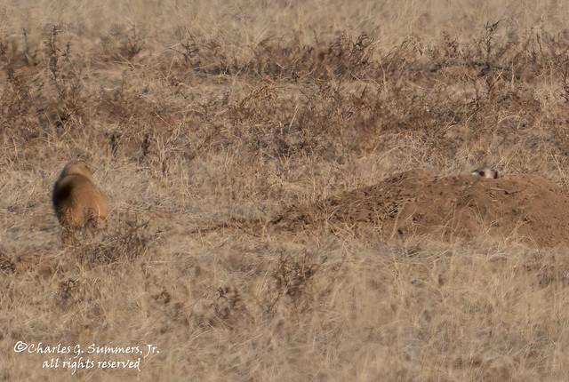 Prairie standoff DSC04794