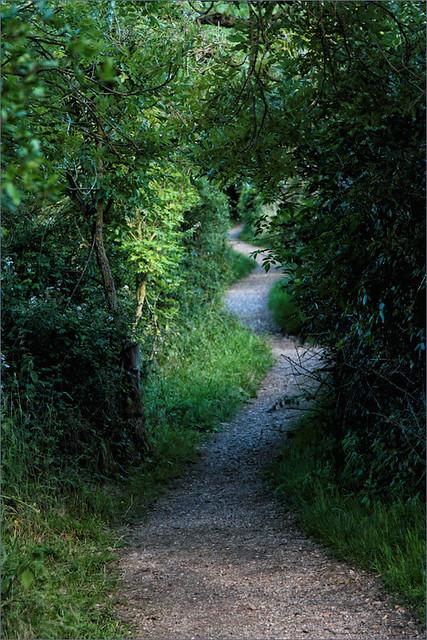 Nature Reserve Path