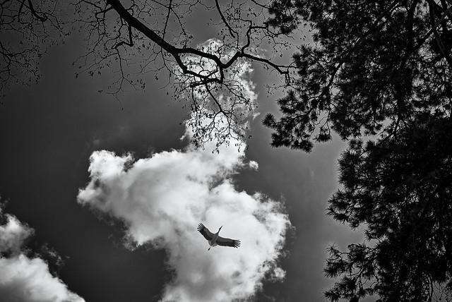 Flugbild