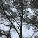 Tree On An Overcast Saturday.