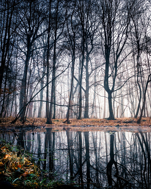 Reflections of a foggy forest