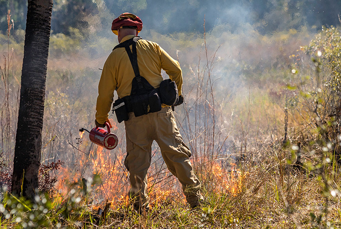 A firefighter starts a fire to serve as a firebreak to prevent spread of a brush fire.