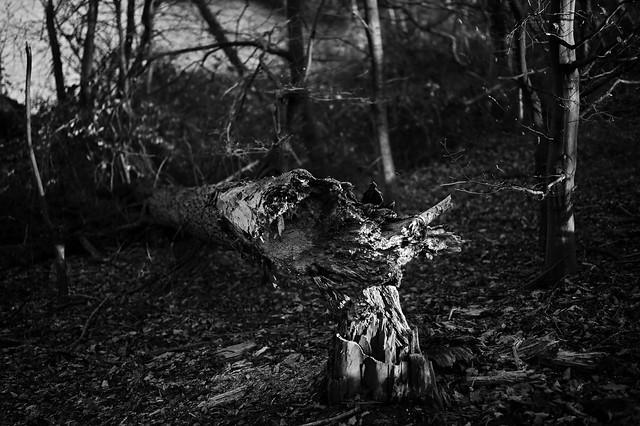 broken tree 3 @ walking path