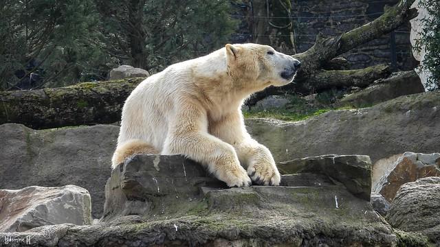 9478 - White bear [Explored 4/3/2021]