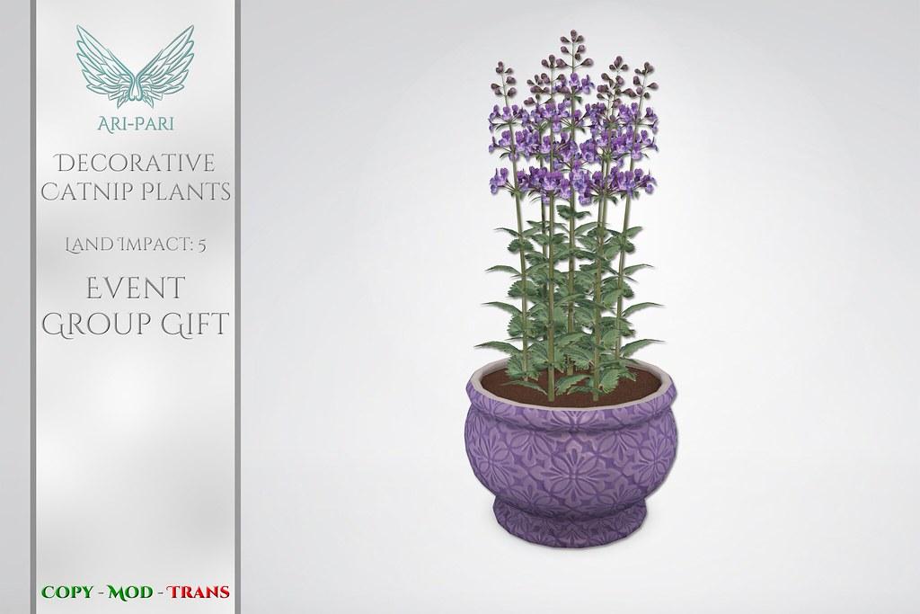 [Ari-Pari] Decorative Catnip Plants