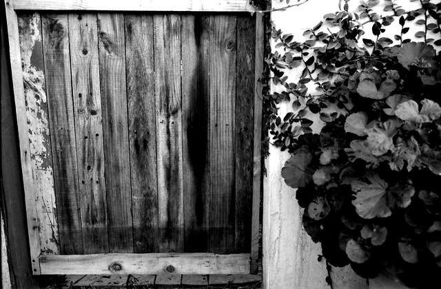 La puerta (Retina IIc Febrero 2021 IMG_20210217_0005)