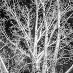 Hydra Tree