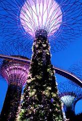 Jardines de la Bahía (Singapur)
