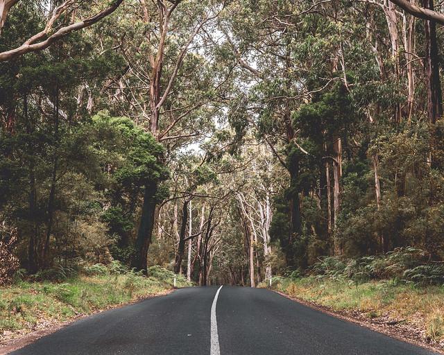 Cape Otway   |   Eucalyptus