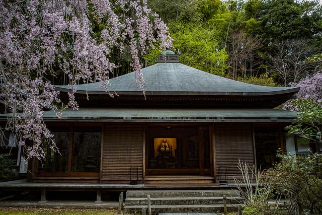 Tokei-ji Temple, Kamakura