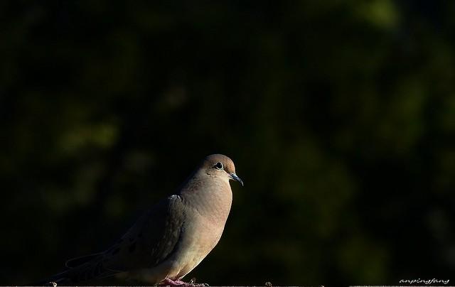 low key dove