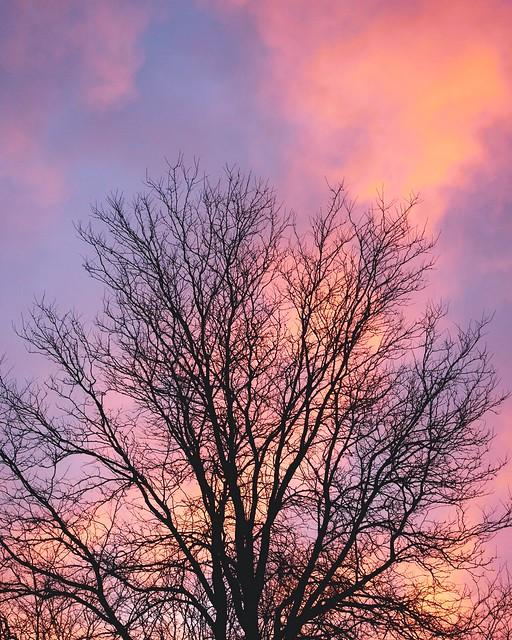 Today's backyard sunrise