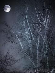 Moon Night Glow