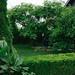 Green home garden.