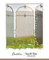 Dahlia - North Star - Trellis Set For Uber