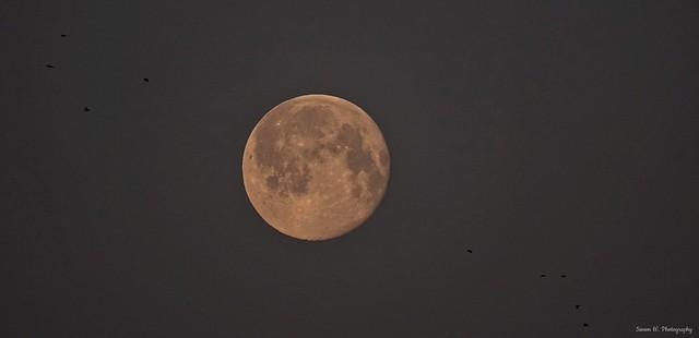 Snow Moon (10). Nottingham. Feb 2021 [in explore] (Flickr Explore)