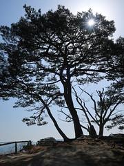 Oshima, Matsushima 60/365