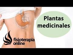 Todas las plantas medicinales para estómago y bazo-páncreas