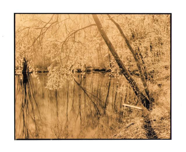 Frühling am Waldsee