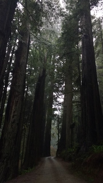 Howland Hill Rd, Jedediah Smith Redwoods State Park  02/09/2017
